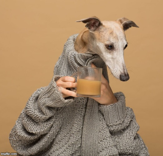 . | image tagged in dog drinking coffee | made w/ Imgflip meme maker