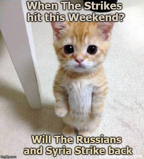 Cute Cat | When The Strikes hit this Weekend? Will The Russians and Syria Strike back | image tagged in memes,cute cat | made w/ Imgflip meme maker