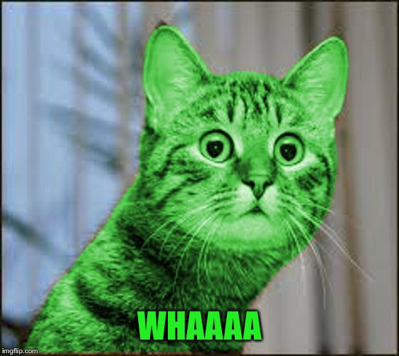 RayCat WTF | WHAAAA | image tagged in raycat wtf | made w/ Imgflip meme maker