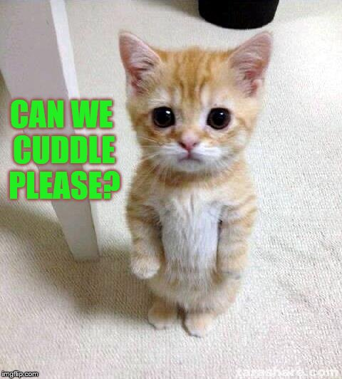 Kitten Asks to Cuddle | CAN WE CUDDLE PLEASE? | image tagged in memes,cute kitten,cuddling kitty,sweet kitten,kitty wants to cuddle | made w/ Imgflip meme maker