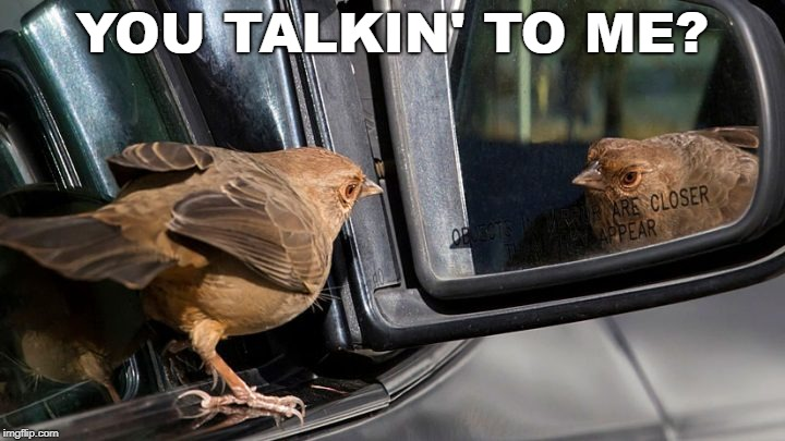 YOU TALKIN' TO ME? | image tagged in mirror,you talkin to me,bird | made w/ Imgflip meme maker