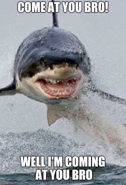Shark | COME AT YOU BRO! WELL I'M COMING AT YOU BRO | image tagged in shark | made w/ Imgflip meme maker
