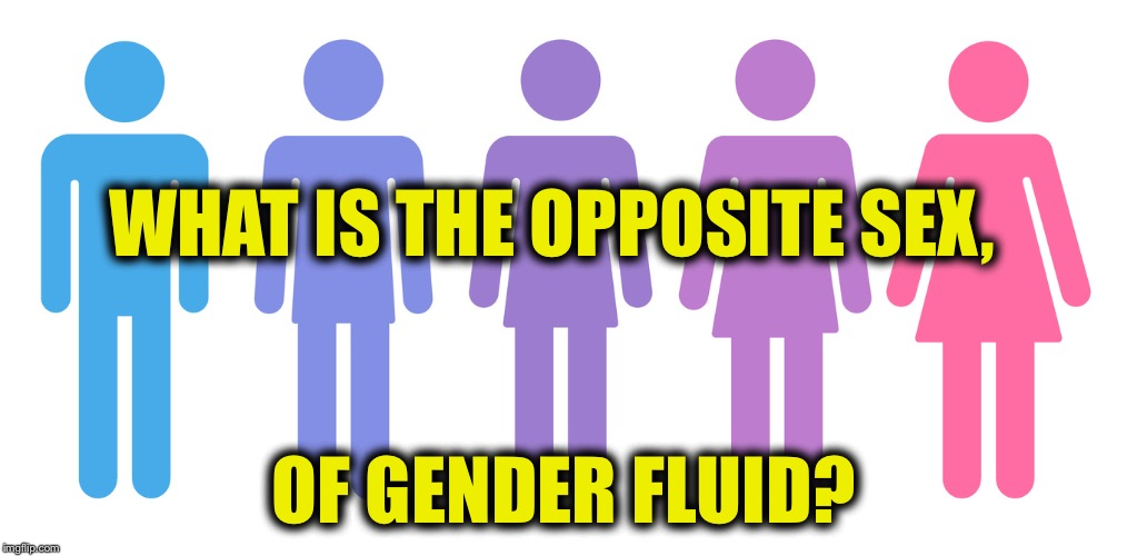 Gender Solid, or Gender Gas? | WHAT IS THE OPPOSITE SEX, OF GENDER FLUID? | image tagged in gender fluid,funny,memes,mxm,al gore,potato | made w/ Imgflip meme maker