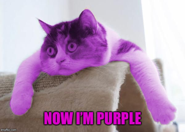 RayCat Stare | NOW I'M PURPLE | image tagged in raycat stare | made w/ Imgflip meme maker