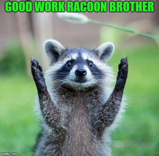GOOD WORK RACOON BROTHER | made w/ Imgflip meme maker