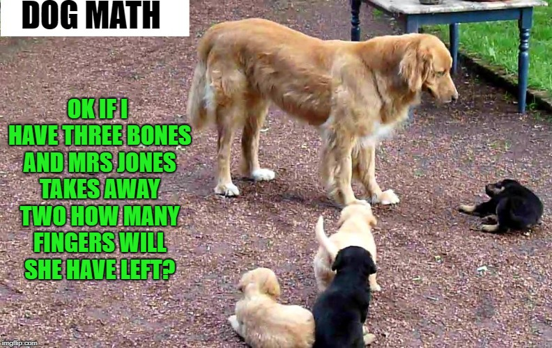 dog math | DOG MATH OK IF I HAVE THREE BONES AND MRS JONES TAKES AWAY TWO HOW MANY FINGERS WILL SHE HAVE LEFT? | image tagged in dogs,funny,cute puppies | made w/ Imgflip meme maker