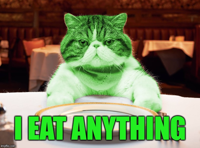 RayCat Hungry | I EAT ANYTHING | image tagged in raycat hungry | made w/ Imgflip meme maker