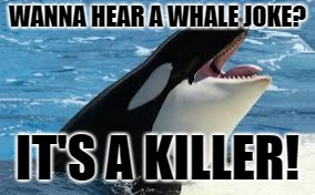 Shout out to memekip... | WANNA HEAR A WHALE JOKE? IT'S A KILLER! | image tagged in bad pun,killer whale | made w/ Imgflip meme maker