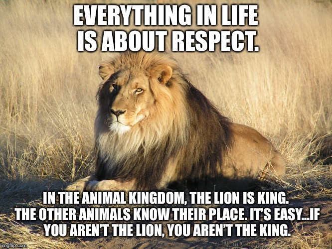 The king | EVERYTHING IN LIFE IS ABOUT RESPECT. IN THE ANIMAL KINGDOM, THE LION IS KING. THE OTHER ANIMALS KNOW THEIR PLACE. IT'S EASY...IF YOU AREN'T  | image tagged in the king | made w/ Imgflip meme maker