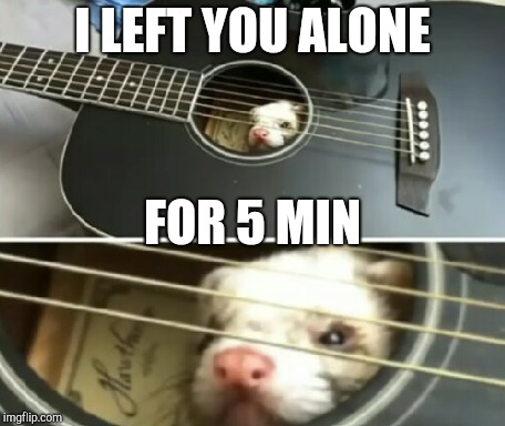 I LEFT YOU ALONE FOR 5 MIN | image tagged in carpet shark,cat snake,parents be like | made w/ Imgflip meme maker