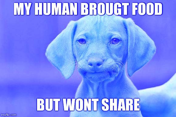 unamused dog | MY HUMAN BROUGT FOOD BUT WONT SHARE | image tagged in unamused dog | made w/ Imgflip meme maker