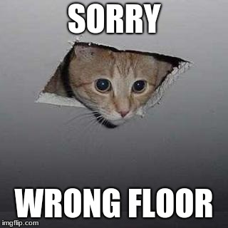 Ceiling Cat | SORRY WRONG FLOOR | image tagged in memes,ceiling cat | made w/ Imgflip meme maker