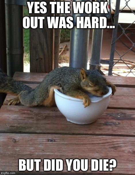 YES THE WORK OUT WAS HARD... BUT DID YOU DIE? | image tagged in exhausted squirrel | made w/ Imgflip meme maker