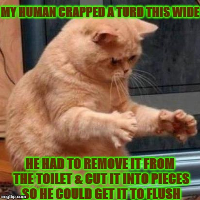 MY HUMAN CRAPPED A TURD THIS WIDE HE HAD TO REMOVE IT FROM THE TOILET & CUT IT INTO PIECES SO HE COULD GET IT TO FLUSH | image tagged in a big crap | made w/ Imgflip meme maker
