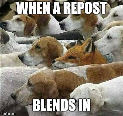 Fox and Foxhounds | WHEN A REPOST BLENDS IN | image tagged in fox and foxhounds | made w/ Imgflip meme maker