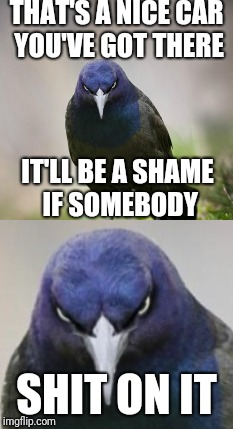 DAMN THOSE BIRDS!!! | THAT'S A NICE CAR YOU'VE GOT THERE SHIT ON IT IT'LL BE A SHAME IF SOMEBODY | image tagged in memes,funny,bird,birds,troll,oh god why | made w/ Imgflip meme maker