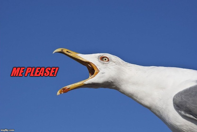 Sea Gull | ME PLEASE! | image tagged in sea gull | made w/ Imgflip meme maker