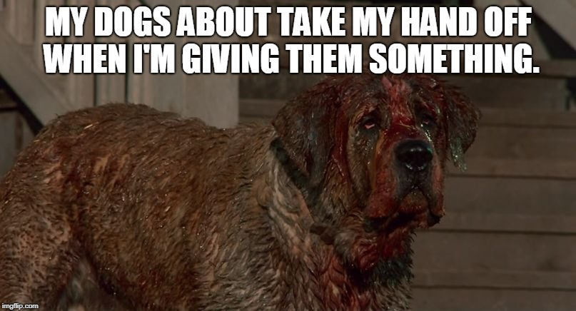 Cujo | MY DOGS ABOUT TAKE MY HAND OFF WHEN I'M GIVING THEM SOMETHING. | image tagged in cujo | made w/ Imgflip meme maker