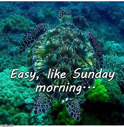 Easy... | Easy, like Sunday morning... | image tagged in like,sunday,morning | made w/ Imgflip meme maker
