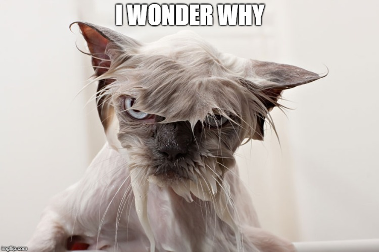 cat | I WONDER WHY | image tagged in cat | made w/ Imgflip meme maker