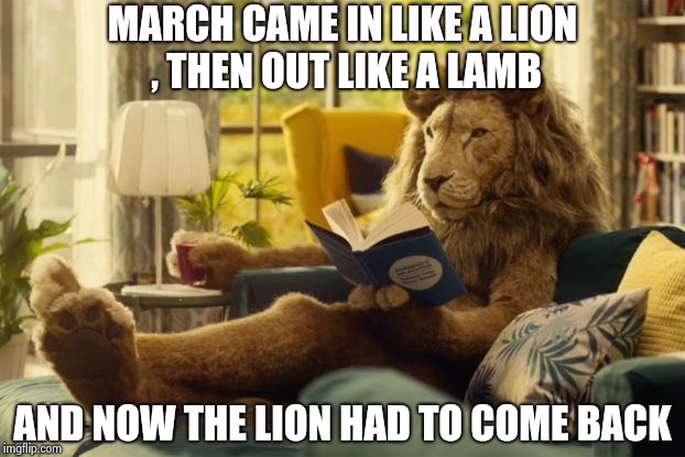 Lion relaxing | MARCH CAME IN LIKE A LION , THEN OUT LIKE A LAMB AND NOW THE LION HAD TO COME BACK | image tagged in lion relaxing | made w/ Imgflip meme maker