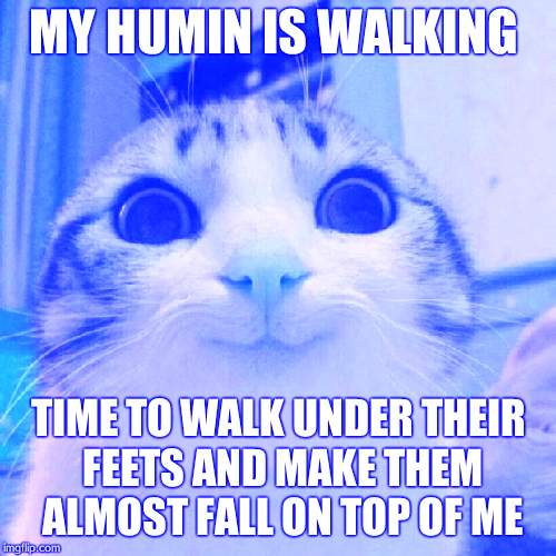 Smiling Cat Meme | MY HUMIN IS WALKING TIME TO WALK UNDER THEIR FEETS AND MAKE THEM ALMOST FALL ON TOP OF ME | image tagged in memes,smiling cat | made w/ Imgflip meme maker