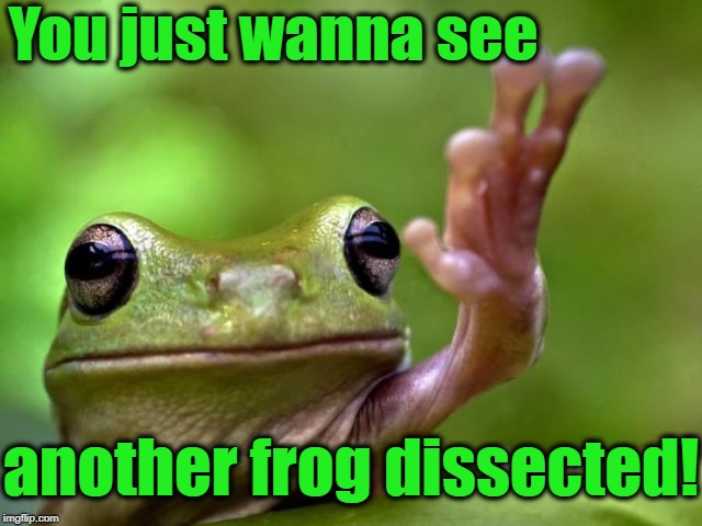 screw you | You just wanna see another frog dissected! | image tagged in screw you | made w/ Imgflip meme maker