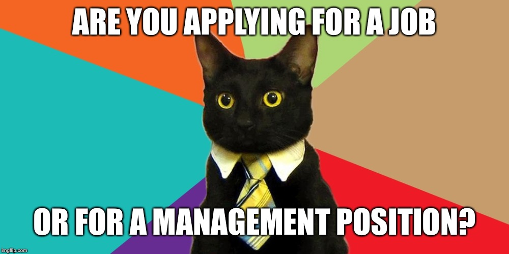 Work | ARE YOU APPLYING FOR A JOB OR FOR A MANAGEMENT POSITION? | image tagged in manager cat,job,work,manager,management | made w/ Imgflip meme maker