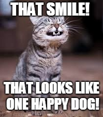 smiling cat | THAT SMILE! THAT LOOKS LIKE ONE HAPPY DOG! | image tagged in smiling cat | made w/ Imgflip meme maker