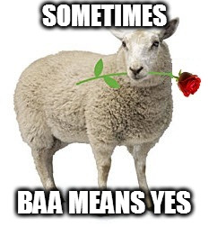 Don't let them pull the wool over your eyes | SOMETIMES BAA MEANS YES | image tagged in memes,sheep | made w/ Imgflip meme maker