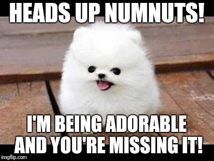 Heads up | HEADS UP NUMNUTS! I'M BEING ADORABLE AND YOU'RE MISSING IT! | image tagged in i'm being adorable,funny dog,cute puppy | made w/ Imgflip meme maker