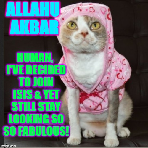 ALLAHU AKBAR HUMAN, I'VE DECIDED TO JOIN ISIS & YET STILL STAY LOOKING SO SO FABULOUS! | image tagged in gay isis cat | made w/ Imgflip meme maker