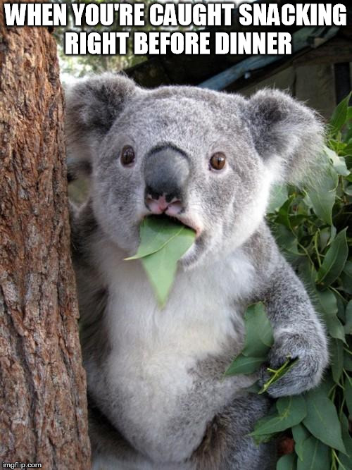 Surprised Koala | WHEN YOU'RE CAUGHT SNACKING RIGHT BEFORE DINNER | image tagged in memes,surprised koala | made w/ Imgflip meme maker
