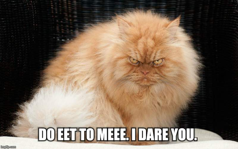 mean cat | DO EET TO MEEE. I DARE YOU. | image tagged in mean cat | made w/ Imgflip meme maker