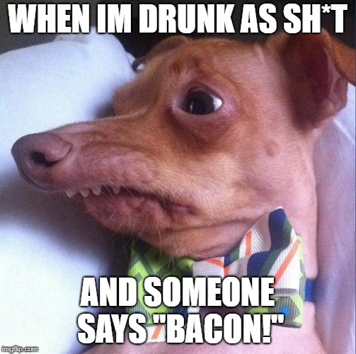 "Tuna the dog (Phteven) | WHEN IM DRUNK AS SH*T AND SOMEONE SAYS ""BACON!"" 