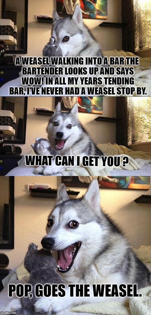 bad joke | A WEASEL WALKING INTO A BAR THE BARTENDER LOOKS UP AND SAYS WOW! IN ALL MY YEARS TENDING BAR, I'VE NEVER HAD A WEASEL STOP BY. WHAT CAN I GE | image tagged in memes,bad pun dog | made w/ Imgflip meme maker