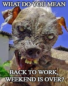 Monday's spirit animal. | WHAT DO YOU MEAN BACK TO WORK, WEEKEND IS OVER? | image tagged in monday's spirit animal | made w/ Imgflip meme maker
