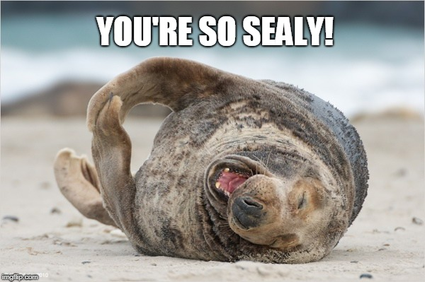 laughing | YOU'RE SO SEALY! | image tagged in laughing | made w/ Imgflip meme maker