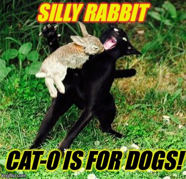 SILLY RABBIT CAT-0 IS FOR DOGS! | made w/ Imgflip meme maker
