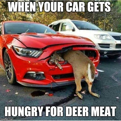 When cars get hungry | WHEN YOUR CAR GETS HUNGRY FOR DEER MEAT | image tagged in funny memes,memes | made w/ Imgflip meme maker