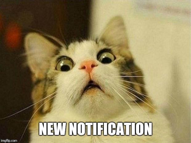 When you check your phone | NEW NOTIFICATION | image tagged in memes,scared cat | made w/ Imgflip meme maker