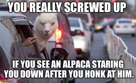 YOU REALLY SCREWED UP IF YOU SEE AN ALPACA STARING YOU DOWN AFTER YOU HONK AT HIM. | image tagged in spicy,animals | made w/ Imgflip meme maker