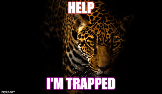 Jaguar | HELP I'M TRAPPED | image tagged in jaguar,animals | made w/ Imgflip meme maker