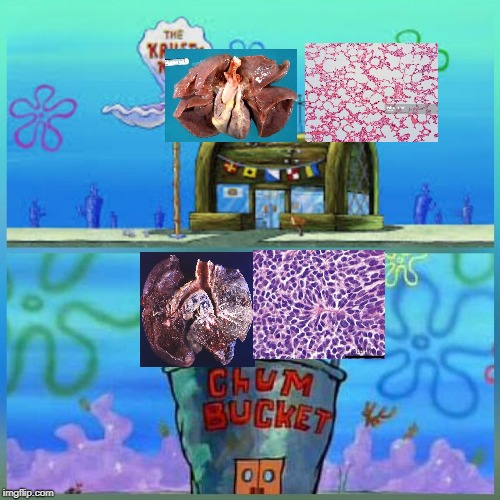 krusty krab vs chum bucket  | image tagged in krusty krab vs chum bucket | made w/ Imgflip meme maker