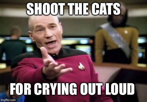 Picard Wtf Meme | SHOOT THE CATS FOR CRYING OUT LOUD | image tagged in memes,picard wtf | made w/ Imgflip meme maker
