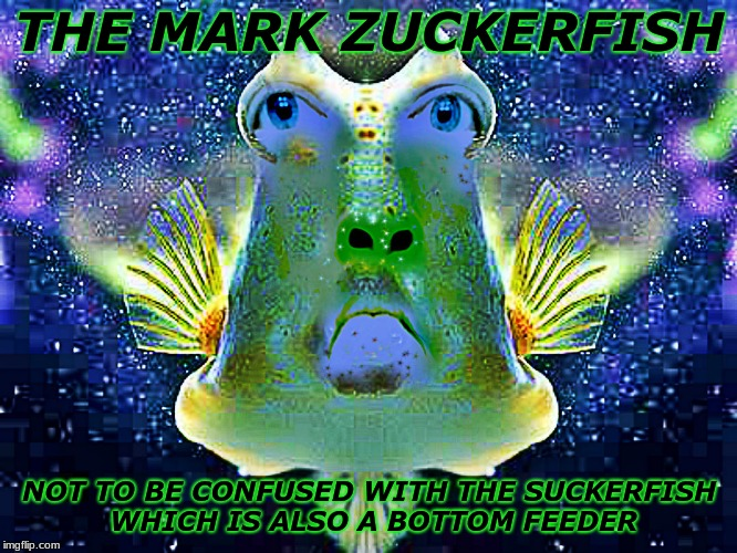 The face you make when you realize you have all the privacy of a fish bowl... | THE MARK ZUCKERFISH NOT TO BE CONFUSED WITH THE SUCKERFISH WHICH IS ALSO A BOTTOM FEEDER | image tagged in mark zuckerberg,fish | made w/ Imgflip meme maker