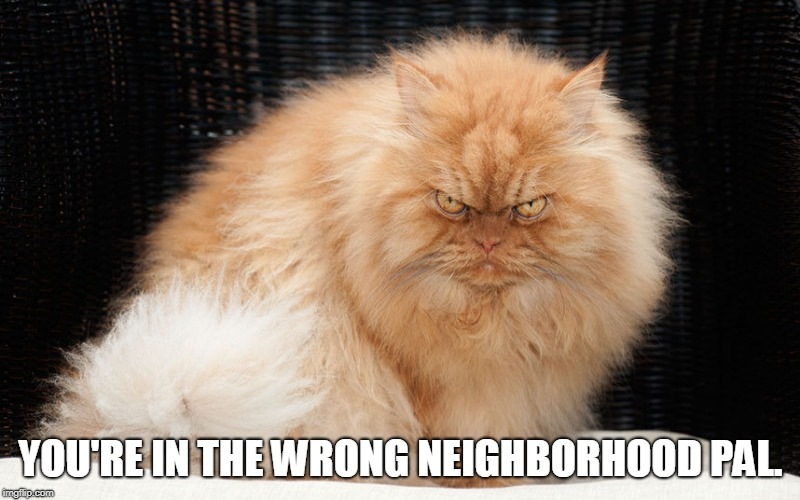 YOU'RE IN THE WRONG NEIGHBORHOOD PAL. | image tagged in mean cat | made w/ Imgflip meme maker