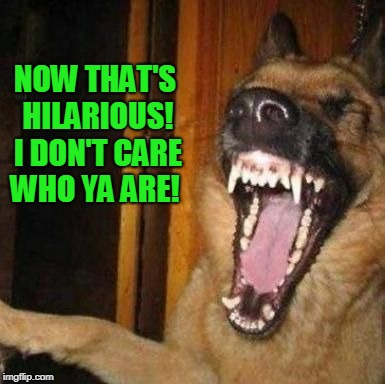 Laughing Dog | NOW THAT'S HILARIOUS! I DON'T CARE WHO YA ARE! | image tagged in laughing dog | made w/ Imgflip meme maker