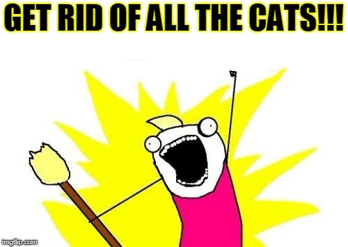 X All The Y Meme | GET RID OF ALL THE CATS!!! | image tagged in memes,x all the y | made w/ Imgflip meme maker