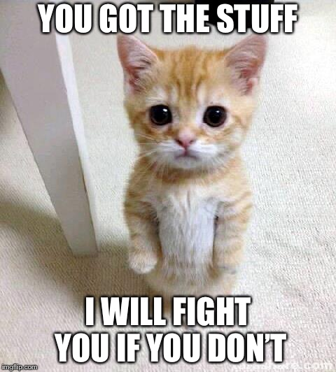 Cute Cat Meme | YOU GOT THE STUFF I WILL FIGHT YOU IF YOU DON'T | image tagged in memes,cute cat | made w/ Imgflip meme maker